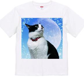 猫「ナナ+nine lives」