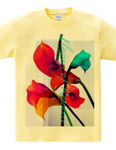 calla-Flowers of Romance-