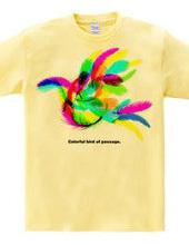 Colorful bird of passage.