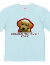 GOLDEN RETRIVER 1