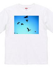 141-black kites
