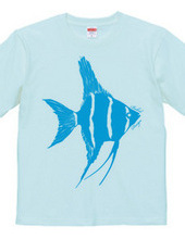 angelfish 02