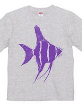 angelfish 03