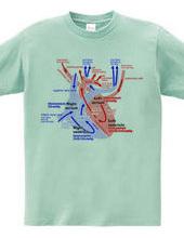 Heart medical genealogy (English)