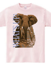 Animal suit  African elephant hen What&a