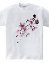 Rain and cherry blossoms
