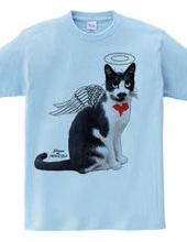 Stray cat Angel