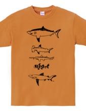 Many sharks