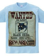 Black shiba spirit C