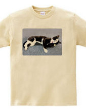 Tuxedo Cat Black&White / Grooming