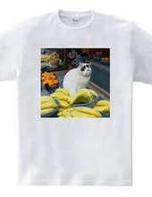 Grocery store cat den / OTC