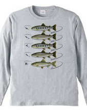 Freshwater fish_1